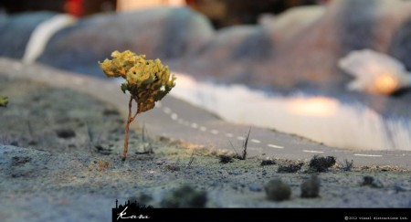 121213_landscape_tree3